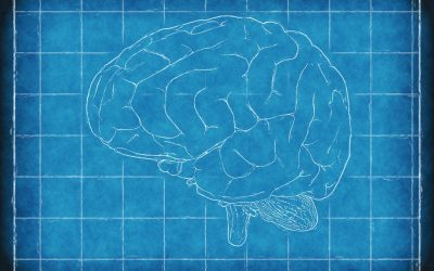 Are there differences in the brains of autistic men and women?